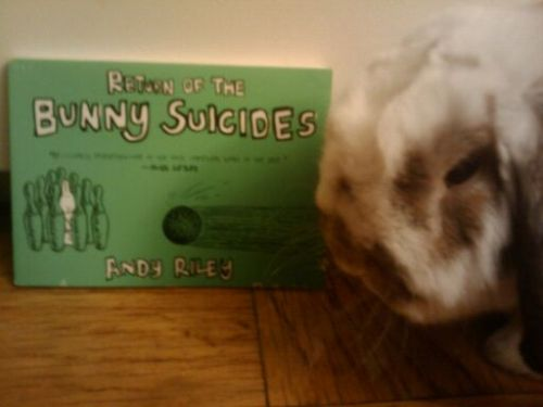 This is my mini lop Donkey with Andy Riley's Return of the Bunny Suicides. Note the bite marks near the bottom, right-hand corner of the book. Clearly, he does not approve.