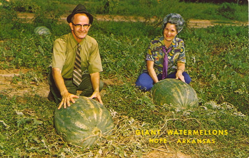"HAPPY NATIONAL WATERMELON DAY!  GIANT WATERMELONS Hope, Arkansas, home of the World's Largest Watermelons. Mr. & Mrs. Lester Kent of Route 1 (Highway 29 South) Hope, Arkansas proudly display two giant watermelons, their largest, grown in 1969, weighed 153 pounds. In 1968-69-70, the Kents grew the World's Champion Watermelons. Hope holds the World Record of 195 pounds in 1935.  So large that they spell them with TWO ""L""s! (It is spelled correctly on the verso.) See LAST YEAR'S Watermelon Day bad postcard."