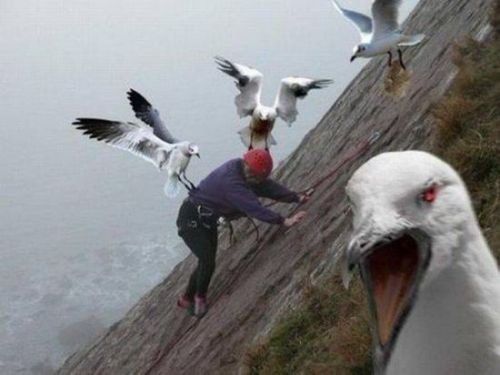 this is why i HATE birds!  creepicrawlies:  Murderous Bird