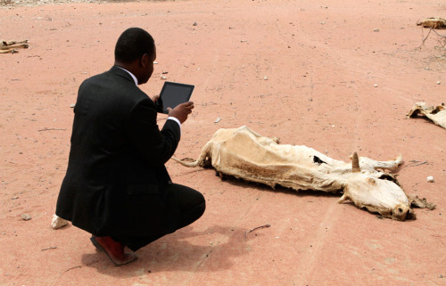 "newsweek:  From The Atlantic: ""An aid worker using an iPad photographs the rotting carcass of a cow in Wajir, near the Kenya-Somalia border, on July 23, 2011."" [via The Dish]  We have a hard-and-fast rule against people taking pictures of things with iPads, but we'll make an exception this time. The issue is too important."