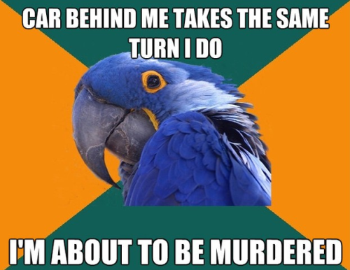 funniest10k:   Best of paranoid parrot  Follow this blog, you will love it on your dashboard