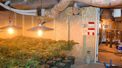 villagevoicemedia:  Study: Marijuana Growers Kids' In Better Health  A new study from Canada flies in the face of stereotypes regarding the offspring of marijuana-growing parents. Children from homes where cannabis is grown were healthy and drug-free, according to the study — in fact,healthier than other children — leading to questions about why such kids are often removed from their homes.    Interesting lol.