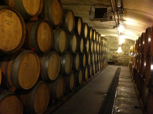 Wine cellar at Tawse Winery.