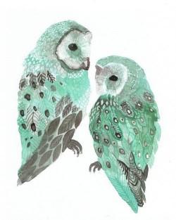 Illustration owls