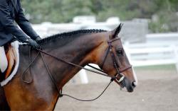 animals horse braids equine hunter hunter jumper horse show hunters horse head bridle