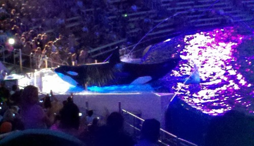 Totally went to Sea World today(: The animals were so cute!!