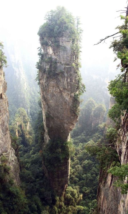 lori-rocks: Southern Sky Column-in the Zhangjiajie National Forest Park, China  Photographer unknown I cant believe they changed the name of this marvelous place form Southern Sky Column Mountains to  Avatar Hallelujah Mountains after the  floating mountains in the avat movie.Thats a lame name for a place like this.I hope one day I can go there.