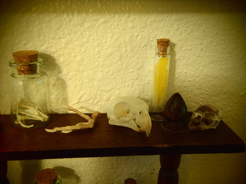 cockatiel skull and parakeet skull. cockatiel foot, misc bones (by majestic dork)