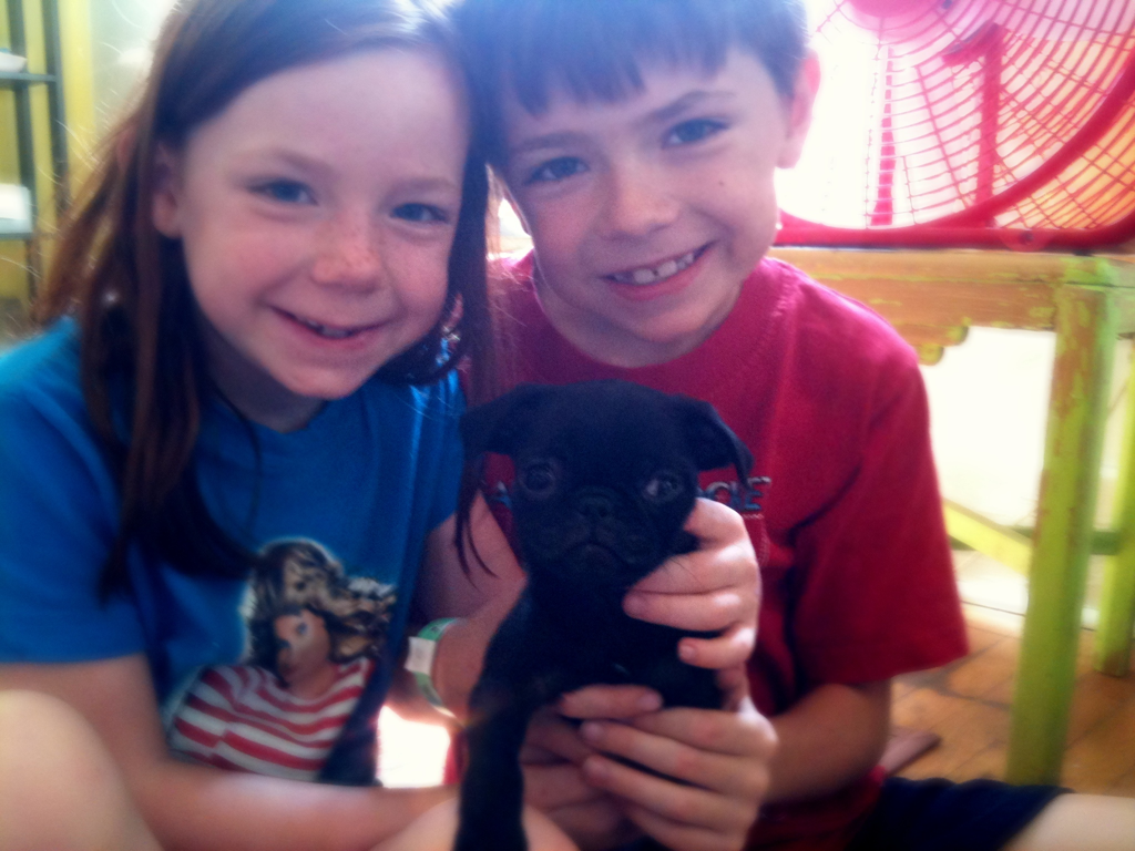 …and we got a new dog. A black pug. A playmate for our Frenchie. Wish us luck.