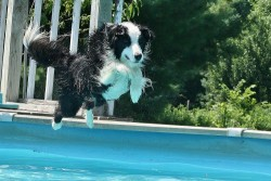 Submitted by Amanda B: Dixie swimming in the pool, her favorite (: Original Article
