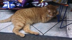 what can we learn from this? bodega cats' preferred location is near the chips. always.  onalosanity:  Guys, this is Bodega Kitty. I call him Deggy. He's the kitty that literally chills in the air conditioned grocery store EVERY SINGLE MOTHER FUCKING DAY. He's either in the middle of the floor, on the newspapers, by the fridge or here, laying by the chips. He loves to be pet. :'D I go with my dad to the store every day just to see the cat lol.