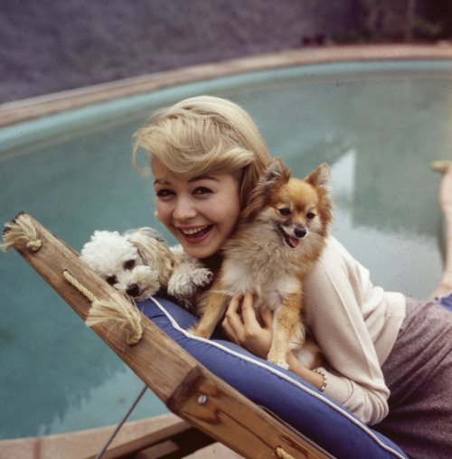 Sandra Dee with a Pomerian and a poodle, circa 1962 Image Source