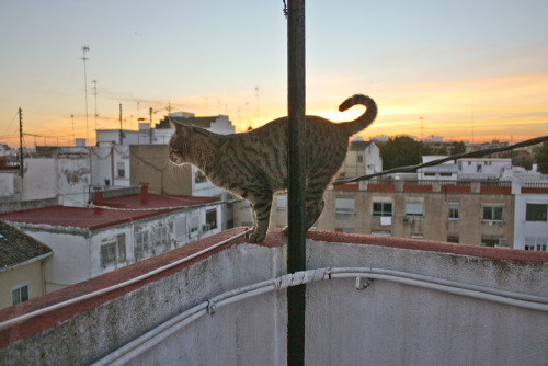 cat standing on the edge of summer.