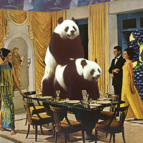 urhajos:  'The Problem With Pandas'. Collage by Melissa Gable