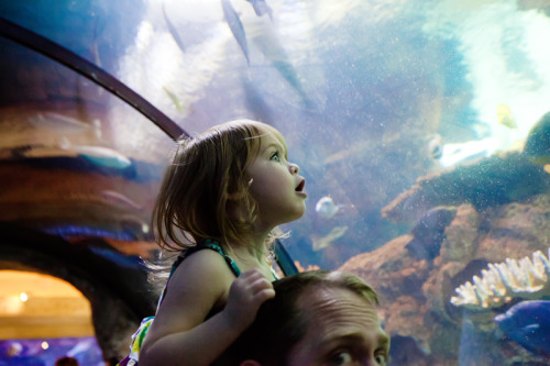 82. One fish, two fish, red fish, blue fish. An aquarium with dad is the best place to see fish. (photo: Miranda Corbell)