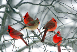 Birds Of A Feather by Acoustic Opus on Flickr.