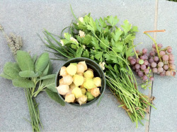 Saturday's harvest.  From left to right: lavender, sage, ground cherries, chives (underneath), parsley (on top), grapes.  The three things in the center were from my plot. The rest was harvested from common areas.  Those grapes are ridiculously good. Especially when they're warm from the sun.