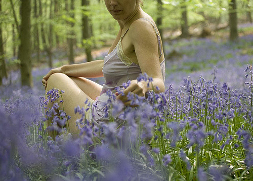 A romantic springtime bluebell-filled copse of woods in England (by sosij)
