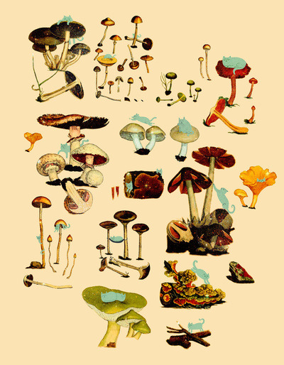 Our print from Society6 today is called CATS + SPACESHROOMS. What more do we have to say? BUY IT.