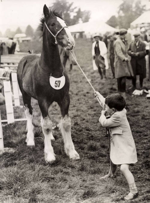 Peter Simpson and foal Mavis Cheniss in motion. England, 1936