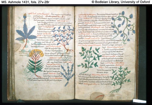 Miscellaneous latin medical and herbal texts, 11th century England, originally from St. Augustine's abbey in Canterbury.
