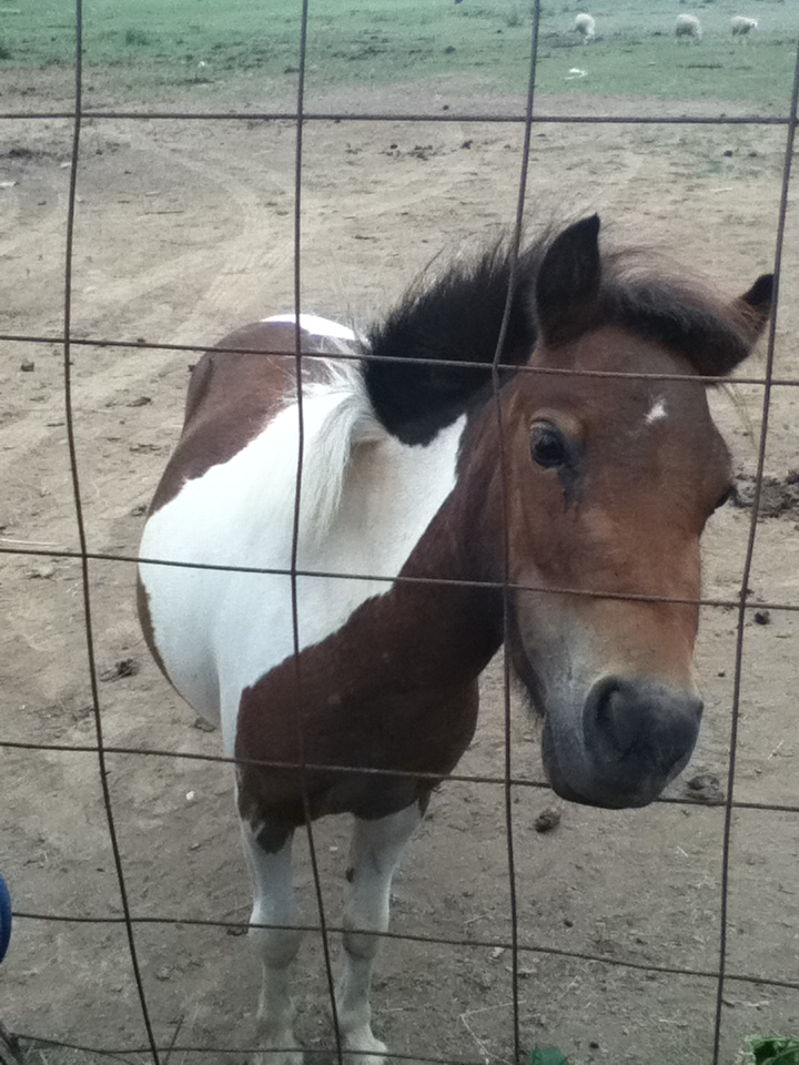 Little friend at my stables : )