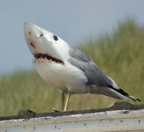 if shark birds ever happen, the race of human beings will come to an end