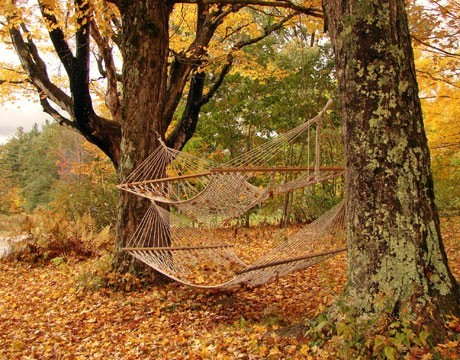 Hammocks!!! (via gardenporn)