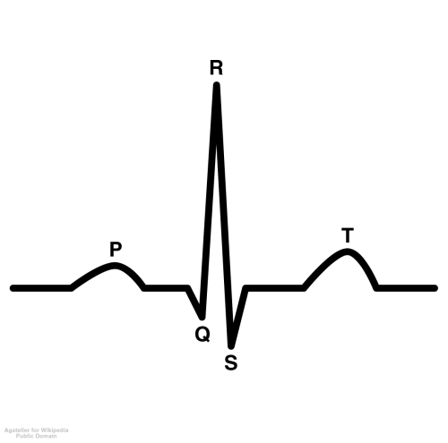 diagnostics:  Interpreting an ECG The ECG (electrocardiogram) is divided into three main sections: the P wave, the QRS complex, and the T wave.  During the phase known as the P wave, the atria contract.  The QRS complex is the ventricular contraction, and the T wave is what is known as ventricular re-polarization—essentially the ventricles preparing for the next contraction.