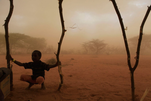 A boy from the family of Rage Mohamed is caught in wind-blown dust as  his family builds a makeshift shelter around a thorny acacia tree, on  the outskirts of Dagahaley Camp, outside Dadaab, Kenya, on July 10,  2011. It took the 15-person family five days to make the journey from  their drought-stricken home in Somalia. They spent two nights sleeping  in the open air under the tree prior to receiving tarps on Sunday. (AP Photo/Rebecca Blackwell) #
