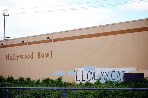 signonpdx:   I LOVE MY CAT  Me too.  From the Hollywood Transit Center.  I've been caught. (Not really.)