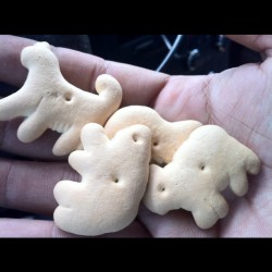 Sweet old lady gave me animal crackers after I dropped her off #nofilter  (Taken with instagram)