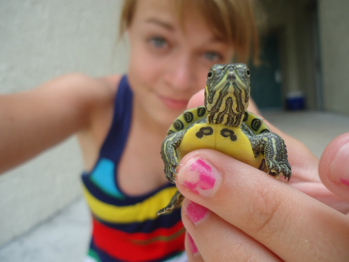 sext0ken:  i luv turtles :o