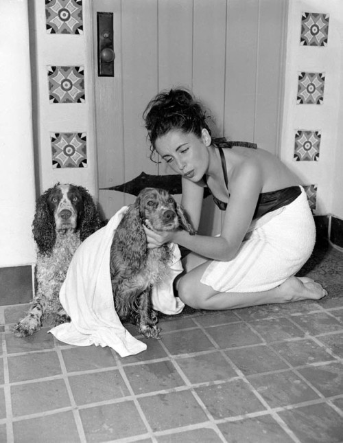 theniftyfifties:  Elizabeth Taylor at home with her dogs.
