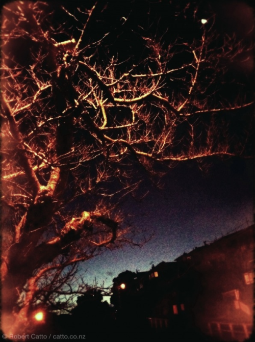 Un tree, la nuit. (In my best Franglais, that.)