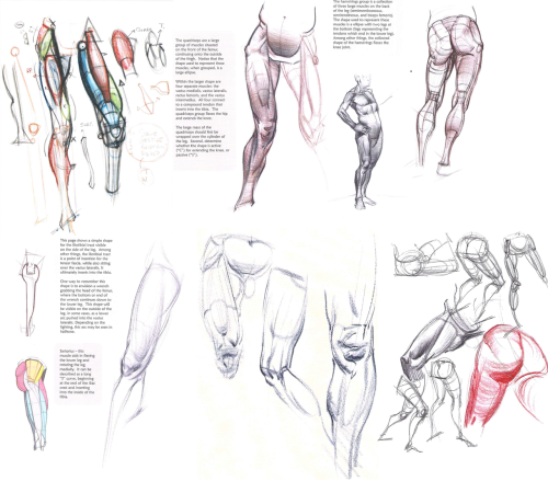 fyeaharttips:  Source: Michael Hampton's Figure Drawing- Design and Invention