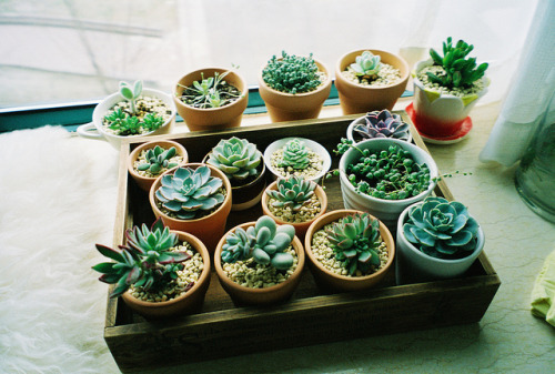Things i love thursday for Decoration jardin cactus