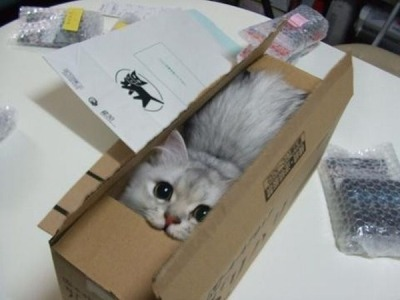 Cats are genetically inclined to pack efficiently. nevillllebamshoot:  OMG tooo cute :3