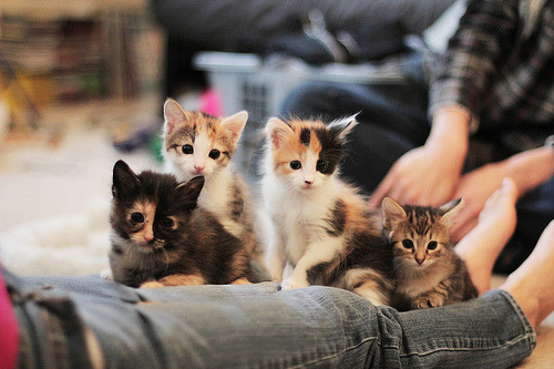 6 weeks old kittens (by bumbe)