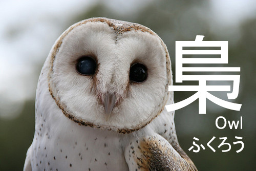 Tee-hee, it really does look like an owl~!