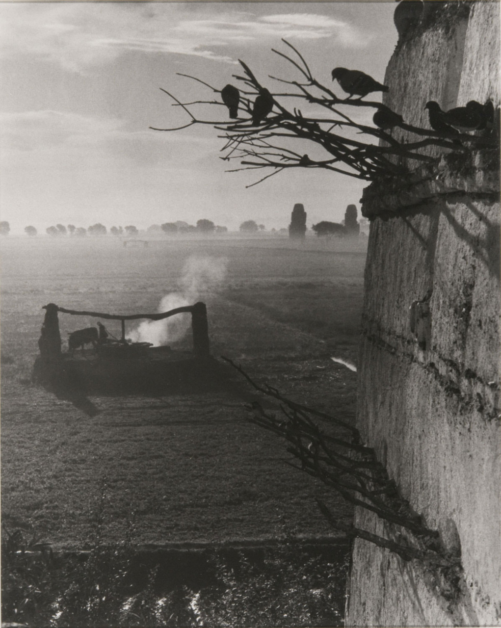 "luzfosca:  Paul Strand ""Waterwheel and Colossi"", Gurna, Egypt, 1959 Thanks to legrandcirque"