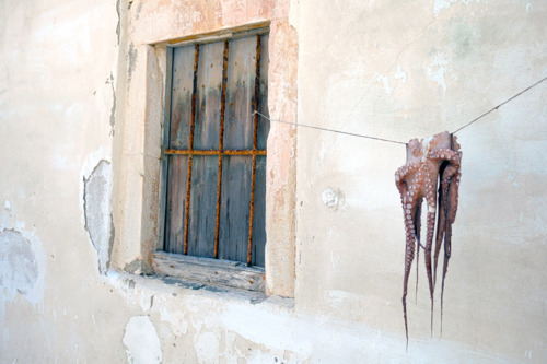 Sun drying Octopus