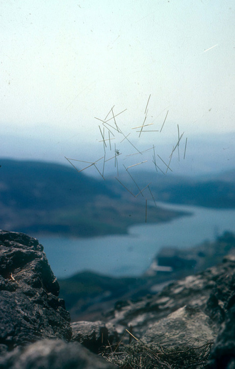 -outlying-:  Andy Goldsworthy, Sticks in cobweb, Wales, May 1980