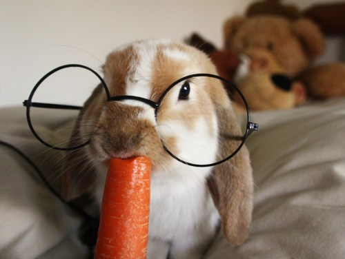 xameliax:  .Crumble thinks he's Harry Potter. (more bunny pictures this way!)