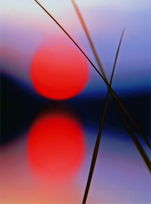 zoegem-heartofanangel:   The tender reeds~ hold each other~ as the red of sunset~ looks on their love {zb}  ninbra:  Grass in sunset.