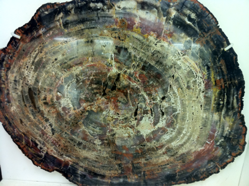 sacred-geometry:  200 million year old petrified wood that I was allowed to run my hand over!