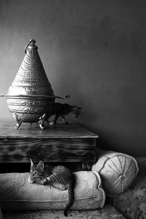 Cats in Morocco shot by Max.