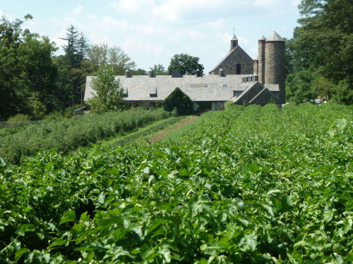 333) Blue Hill at Stone Barns - rear view - Pocantico Hills, NY photo (c) Alan Strauber (all rights reserved) 8.5.11