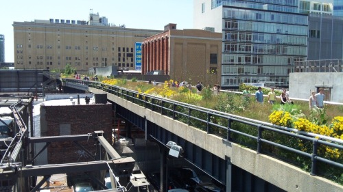 Have you visited the High Line in NYC?  Amazing views of NYC!  Check it out! #education, #arted, #art, #NYC