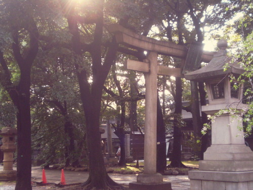 voraciousscrolling:  Hikawa Shrine in Akasaka, Japan